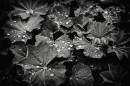 Après la pluie (Sylvain Lussier)