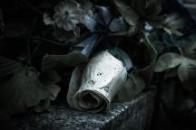 dead white rose (Annick Sauvé)