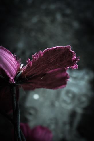 fleur finie fanée foutue (Annick Sauvé)
