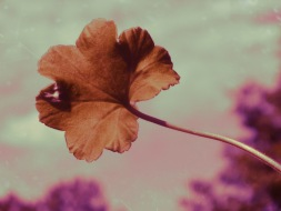 Éden Rose (3)