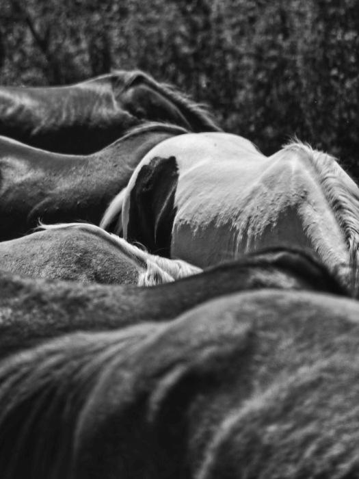 Equus (1)