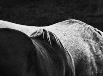 Equus (13)