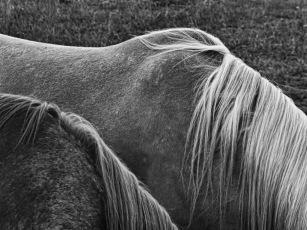 Equus (2)