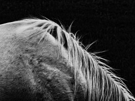 Equus (8)
