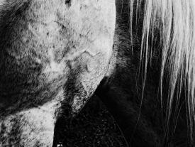 Equus (9)