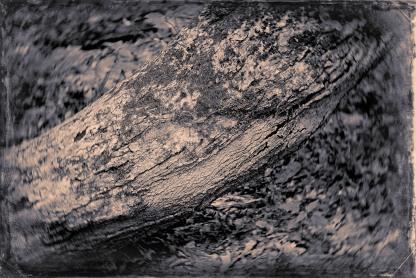 Arbre (11)
