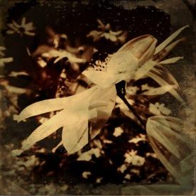 Flora (8)